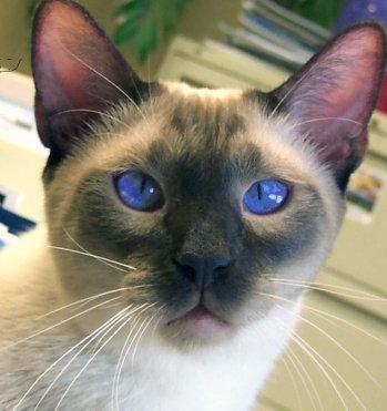Cat Laxative