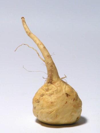 Maca Herb